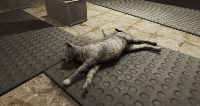 Fallout 4 - How to Spawn Cats